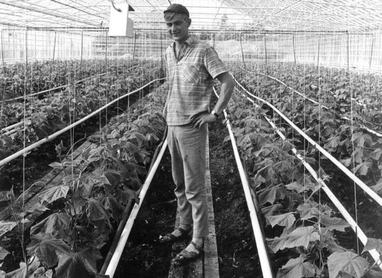 Kauppapuutarhuri Timo Juntti 1970.